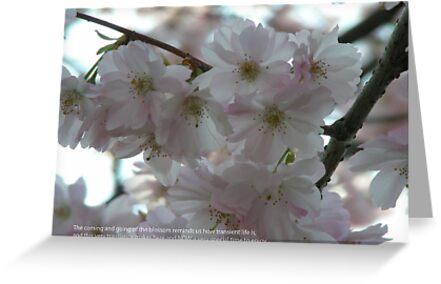 April by Bob Leckridge