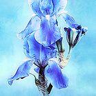 Iris Paar In Blau von Anita Pollak