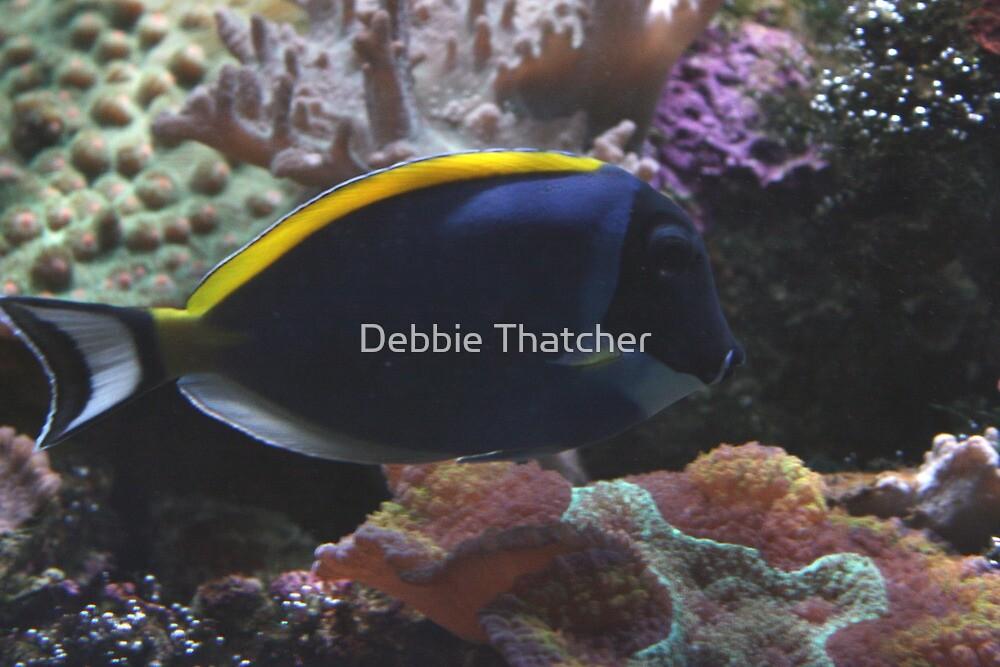 Surgeon Fish by Debbie Thatcher