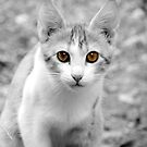 Crete Kitty by CinB