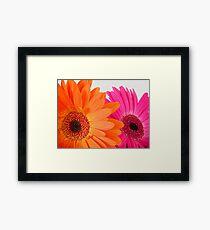 Orange and Pink Gerbera Flowers Framed Print
