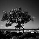 Stormy Day.....Port Douglas.....North Queensland by Imi Koetz