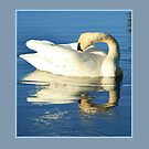 Matted Icy Reflection by Steve Cushman