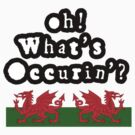 Oh Whats Occurin' ? by Steve's Fun Designs