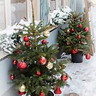 Decorated Christmas trees on street covered in snow. by fotorobs