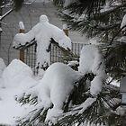 Back Yard Snow Angel by eoconnor