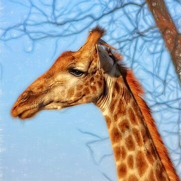 A Giraffe and His Bird by KayBrewer