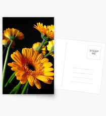 yellow gerbera Postcards
