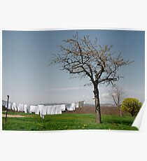 White Washing on Clothes Line  Poster