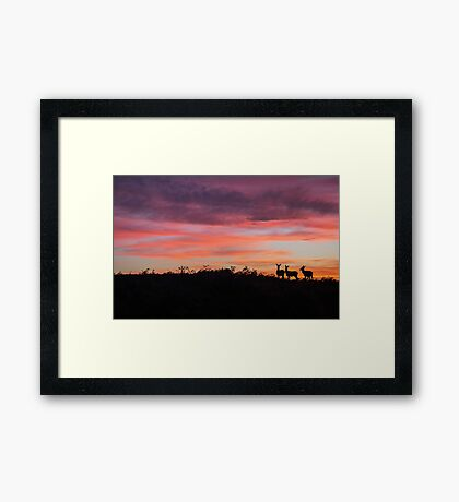 Red Deer silhouette against a fiery Peak District sunset Framed Print