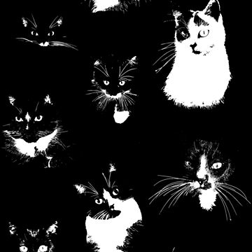 Large Black and White Cats by TooCoolUnicorn
