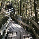 Boardwalk by Lynn  Gibbons