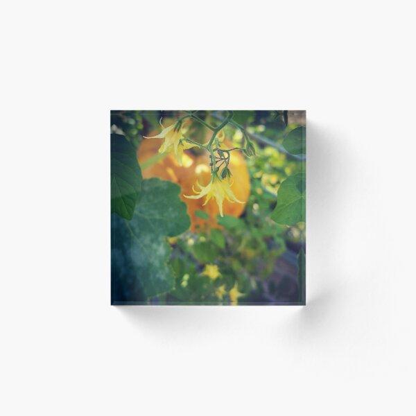 Pumpkin and Blossoms Acrylic Block