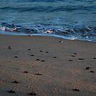 Turtles 11 by JMerriman