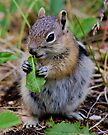 Baby Getting Her Vegetables by Betsy  Seeton