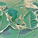 Acer Negundo 'Flamingo' Leaves by Gabrielle  Lees