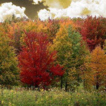 Vermont Ridge by mindydidit