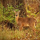 Deer on the Edge of the Woods  by lorilee
