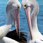 Pelican love 06163 by kevin Chippindall