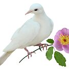 Dove with Wild Rose by catsclips