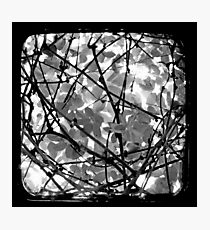 The Chocolate Vine Through The Viewfinder (TTV) Photographic Print