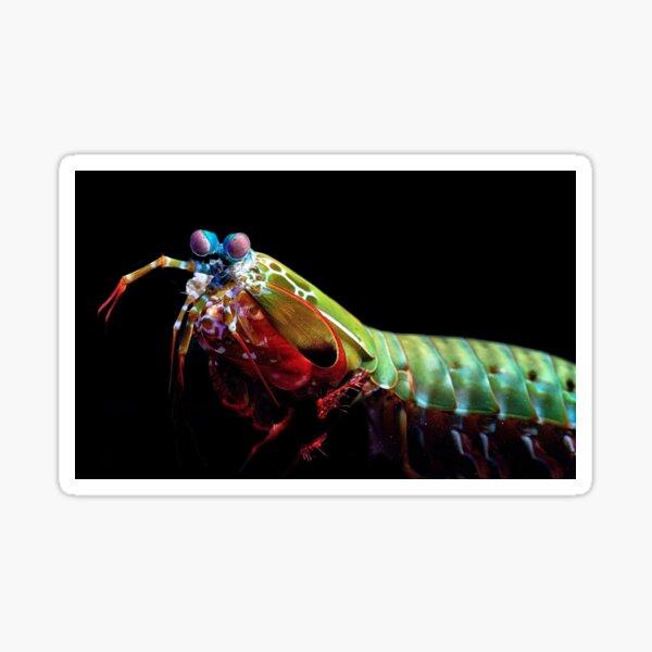Mantis Shrimp Sticker