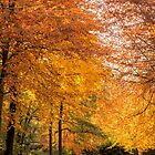 Autumn Gold by JEZ22