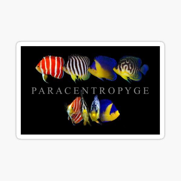 Paracentropyge  Sticker
