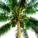 Coco, Coco, Coconuts!! by diLuisa Photography