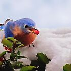 Winter Bluebird and Berry by Kathy Weaver