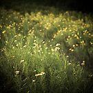 little wildflowers by Rachel Kelso