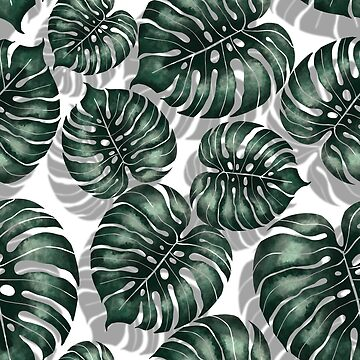 Monstera  by Gribanessa