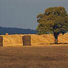Stormy Harvest by citrineblue