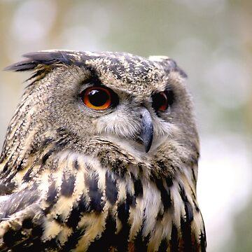 Eagle Owl by obadiah