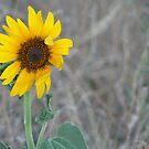 Golden Sunflower by Virginia McGowan
