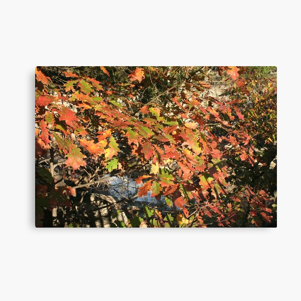 Leaves over the Potomac Canvas Print