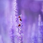 Heady lavender color by Anastasia Ri