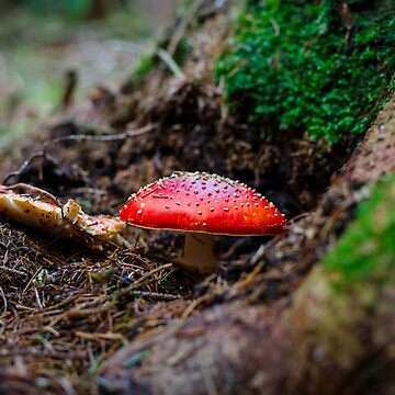 Mushrooms close-up view, autumn in the forest, France by sorokopud