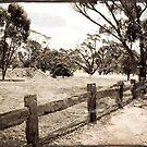 Old Farm Fence by pennyswork