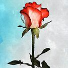 Red Tip Rose by Buddy Sears by Buddy Sears