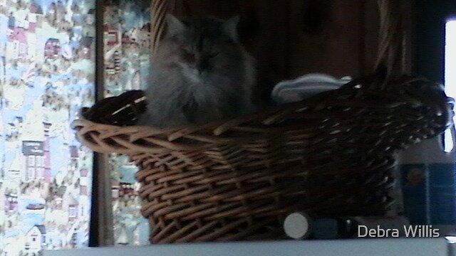KITTY IN A BASKET! by Debra Willis