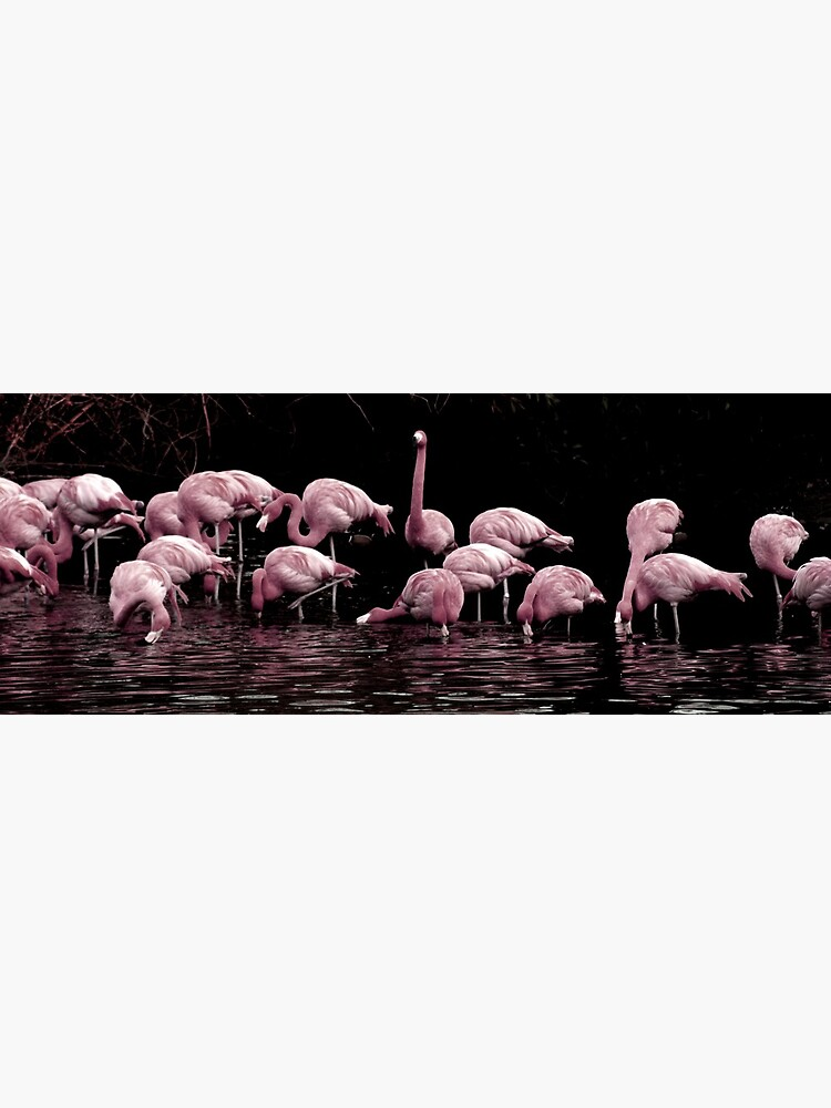 Pale Pink Panorama by JandMPhoto