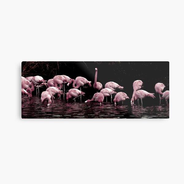 Pale Pink Panorama Metal Print