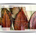 Segmented Autumn by Rene Crystal
