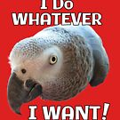 I Do Whatever I Want! African Grey Parrot by einsteinparrot