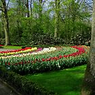 Colourful Keukenhof Gardens - A Photographer's Paradise by EasterDaffodil