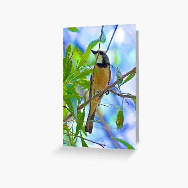 NT ~ WHISTLER ~ Rufus Whistler PBY9RAW8 by David Irwin ~ WO Greeting Card
