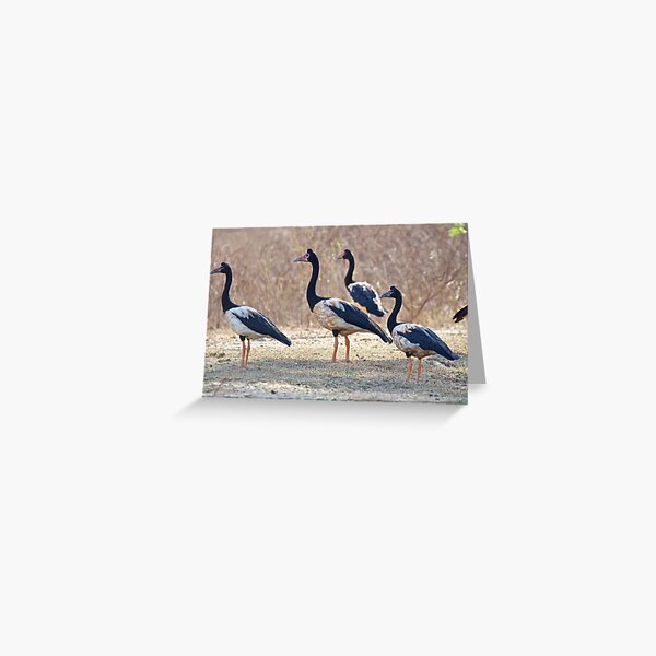 NT ~ WATERFOWL ~ Magpie Goose S2R4FW9H by David Irwin ~ WO Greeting Card