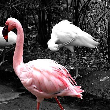 Flamingo by Orikall