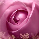 Gorgeous Soft Pink Rose With Gold Frames 3 by hurmerinta